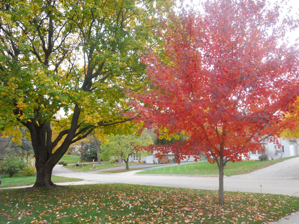 Lori berezovsky inquire for Nice trees for front yard
